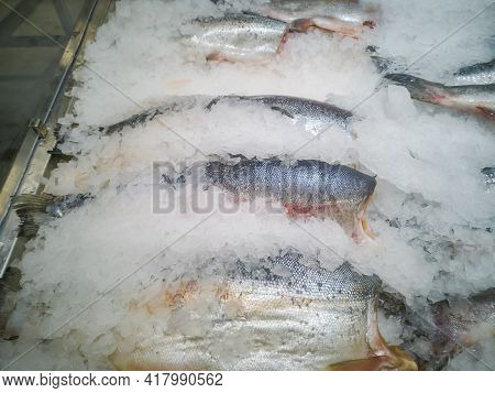 Frozen Slices Of Big Fish Among Ice In A Hypermarket