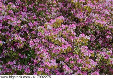 Flowers In A Decorative Truss Botanical Garden Emek Hefer