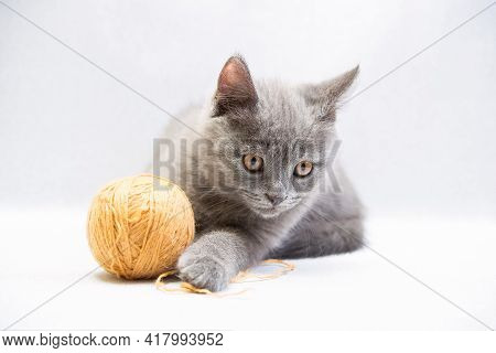 Cute Gray Domestic Young Kitten Play With Ball Of Thread On Light Background, Horizontal Photo
