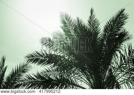Tropical Tourism Paradise Palms In Sunny Summer Sun Green Sky. Sun Light Shines Through Leaves Of Pa