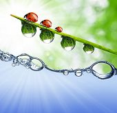 Fresh grass with dew drops above the water level poster