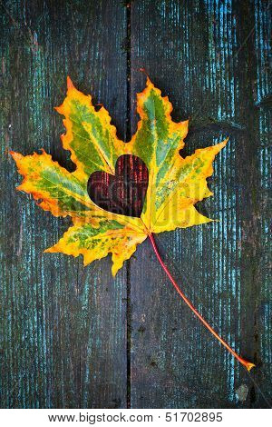Fall in love photo metaphor. Colorful maple leaf with heart shaped hole lays on dark wooden table poster