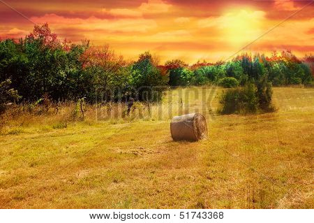 Hayfield At Sunset