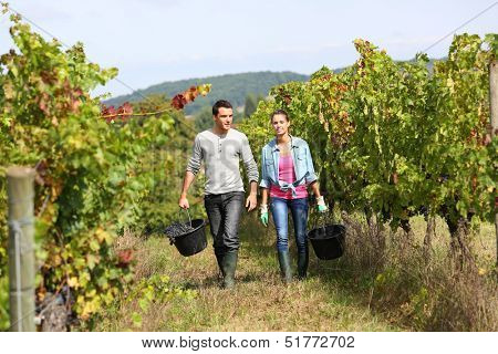 Couple of winegrowers walking in vineyard
