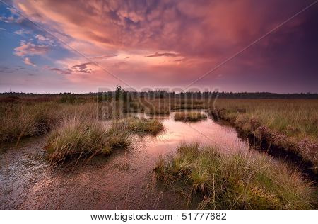 dramatic red sunset with rare mammut clouds over swamp poster