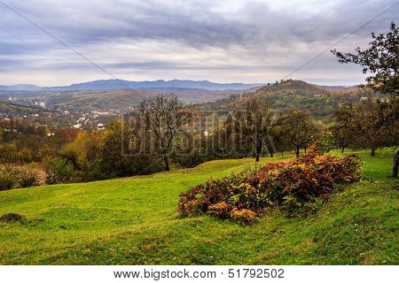 Orchard And A Wild Rose On Mountain Top In Autumn