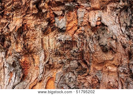 Texture Of Old Tree Bark