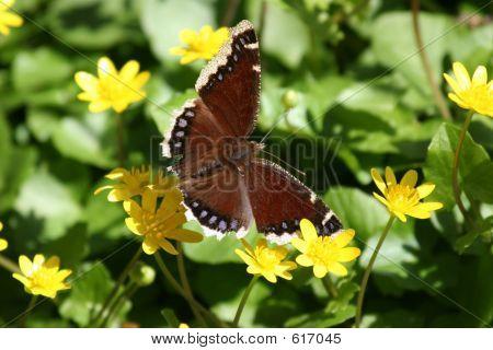 Butterfly In A Flower Field