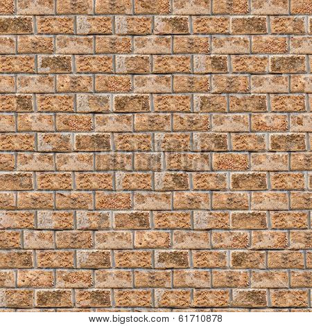 Coquina Wall. Seamless Tileable Texture.