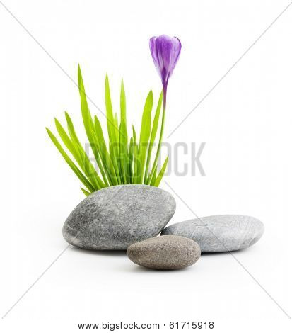 Stones with grass and flower isolated on white background.