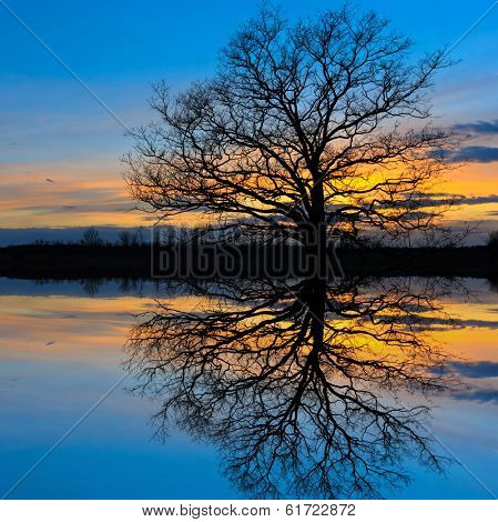 leafless tree on sunset background with water reflection