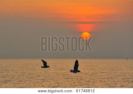 Seagulls Are Flying During Sunset