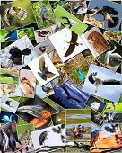 Collage of various species of birds poster