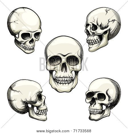 views of human skull