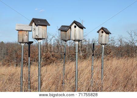 Bird houses on tall metal poll