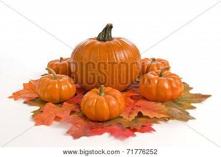 Autumn Pumpkins Display