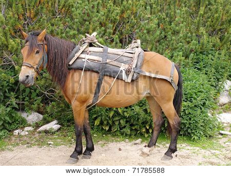 Brown Pack Horse With Sandle In Mountain