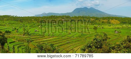 Landscape With Rice Fields And Agung Volcano. Indonesia, Bali