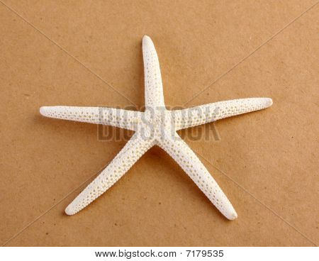 Starfish on Brown Paper