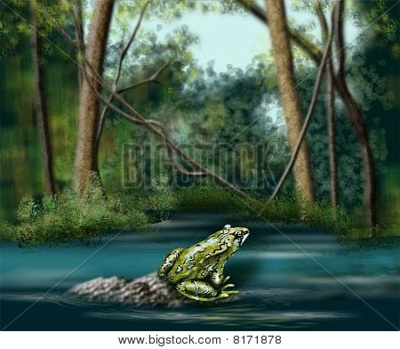 Frog Stream