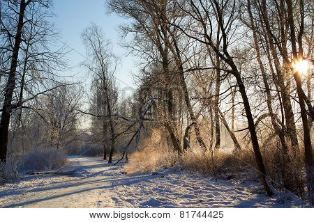 Footbridge on trail in winter forest. Rural landscape.