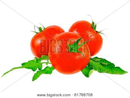 Lush tomatos with green leafs. Isolated over white poster