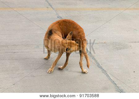 Brown Homeless Dog