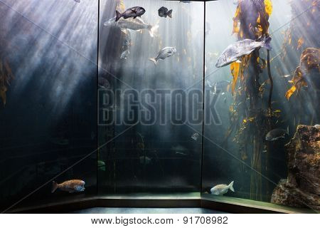 Fish swimming in a darkest tank with yellow algae at the aquarium