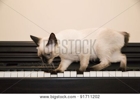 Pussycat Tries To Play The Piano With Its Paws