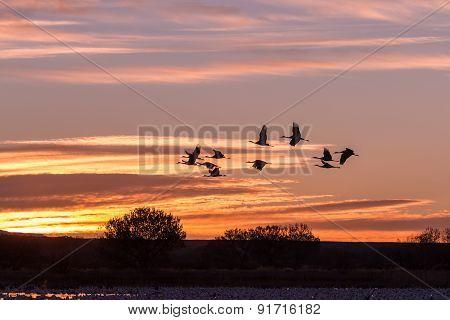 Flying Sandhill Cranes at Sunrise