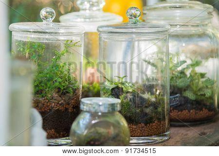 Terrarium, Small Tree In A Bottle