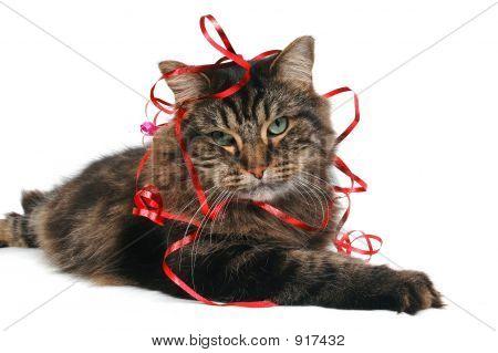 Cute Cat Gift 2
