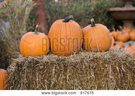 Pumpkin Tio