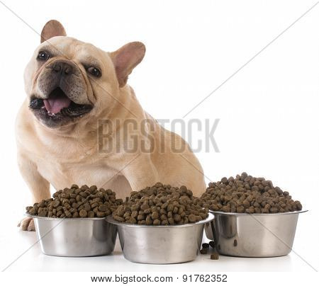 feeding the dog - french bulldog sitting beside several bowls of dog food on white background
