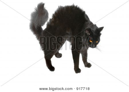 Halloween Bristle Black Cat