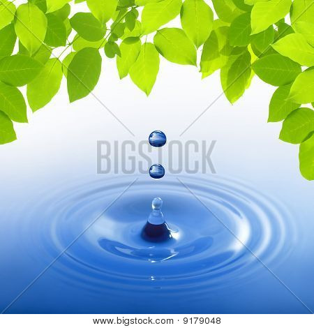 Blue Water Drop On Leaves Background