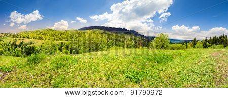 Meadow Near Forest In Mountains