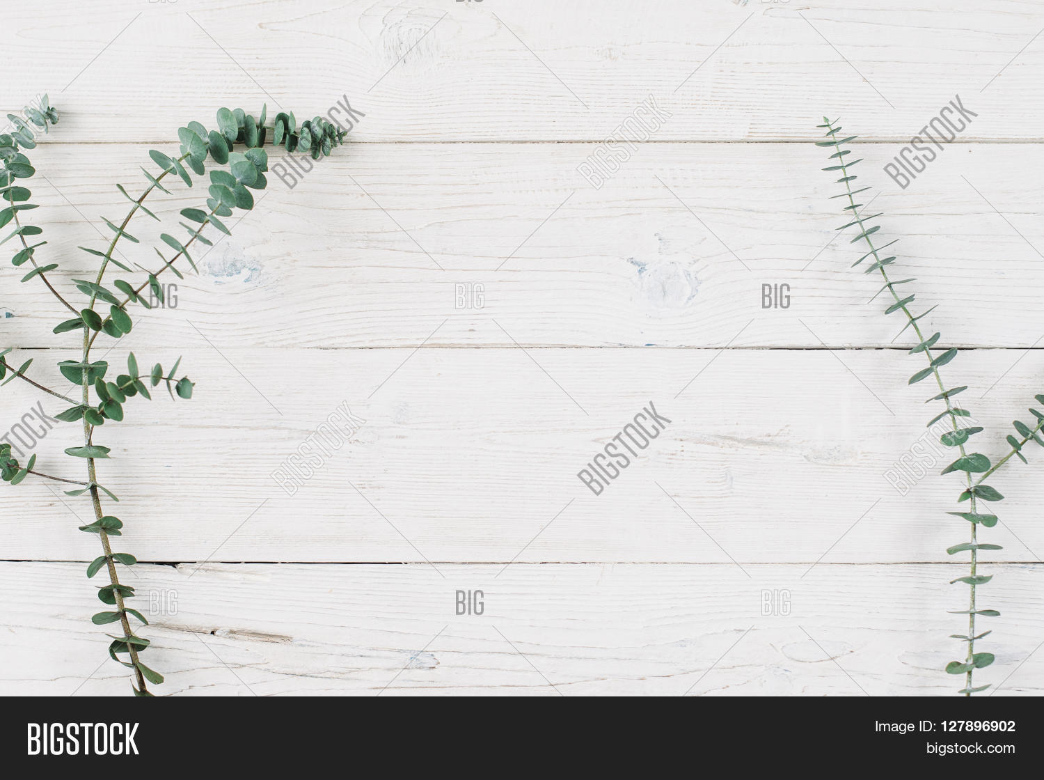 Spring Plant Over Wood Background Decorative Branch Top View On White Wooden With