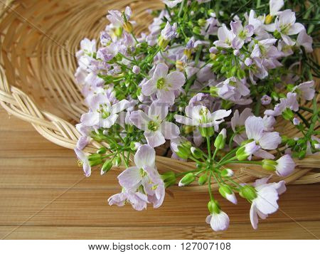 Bunch of cuckoo flower in small basket