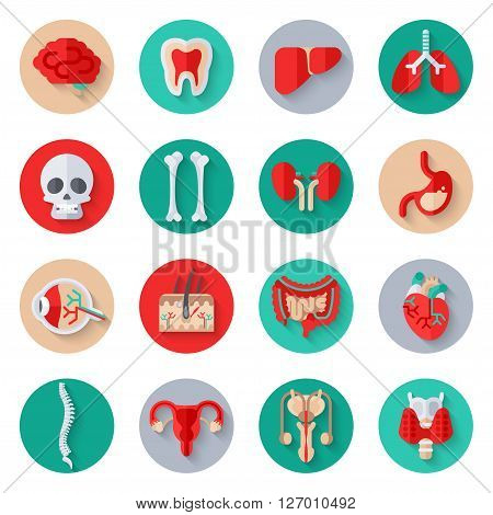 Human Internal Organs Flat Icons on Circles Set. Vector illustration. Skull and bones, liver and kidney, stomach, skin with hair, heart, man and woman reproductive system, spine, healthy tooth.