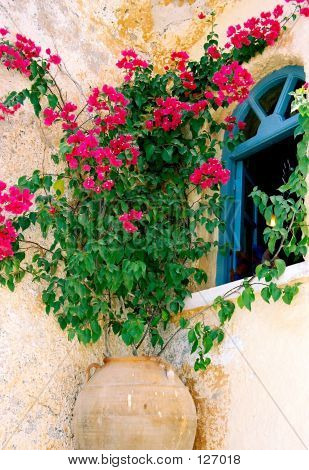 Red Bougainvillea, Blue Window