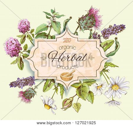 Vector vintage banner with wild flowers and medicinal herbs. Design for cosmetics, store, beauty salon, natural and organic, health care products.Can be used like a logo design