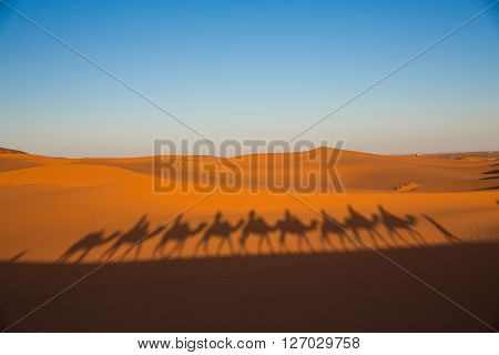 Camal caravan on a Nomad trip through sand desert