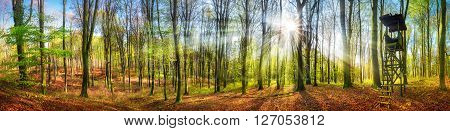 The sun shining brightly in a forest at springtime wide panorama with rays of light and a hunting lookout