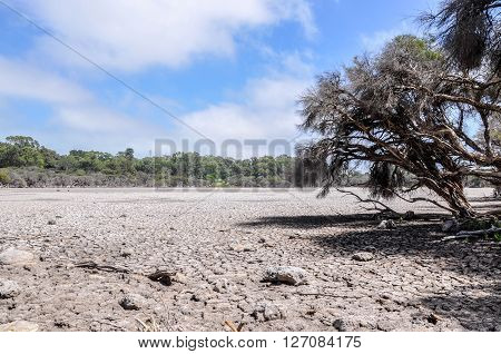 Drought landscape at Manning Lake with a dry cracked bed surrounded by wetland trees in Hamilton Hill, Western Australia.