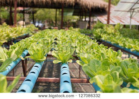 Organic Vegetable Farm.