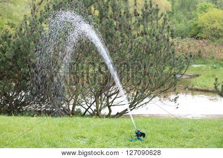 image of one sprinkler in japan garden