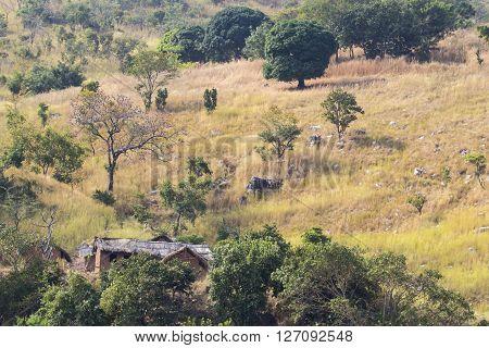 Summer landscape with huts along the shore of lake Tanganyika Tanzania