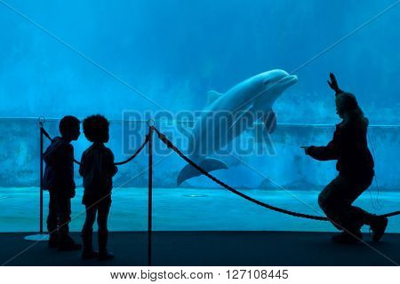 GENOA, ITALY - MARCH 22, 2016: Children watch as an animal trainer performs with a common bottlenose dolphins (Tursiops truncatus) in the Genoa Aquarium in Genoa, Liguria, Italy.