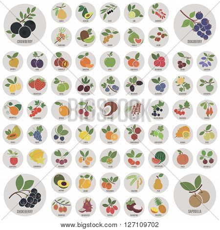 Fruits and berries. A large set of vector icons